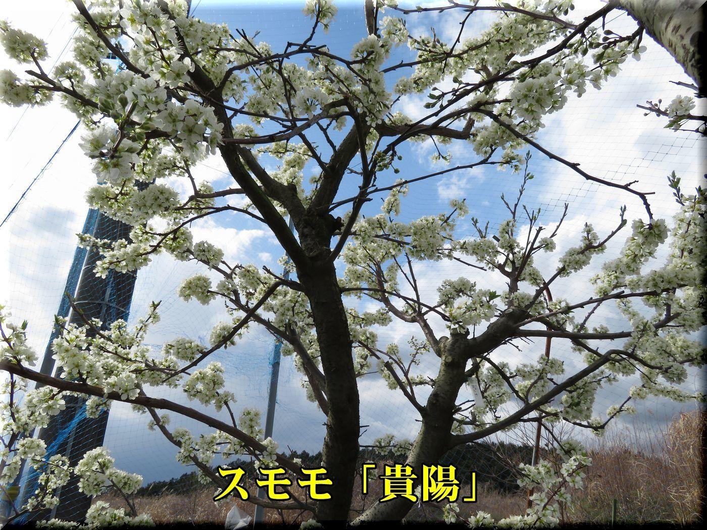 1kiyou180323_018.jpg