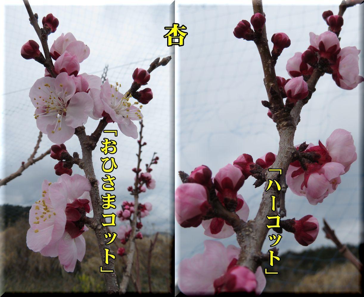 1ohisama_har180316_006.jpg