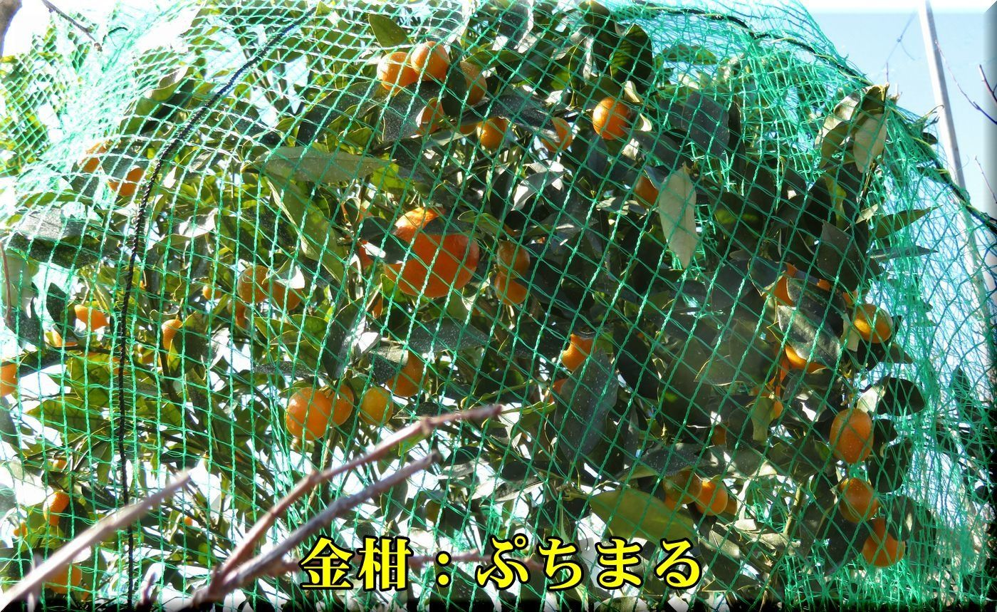 1putimaru180125_001.jpg