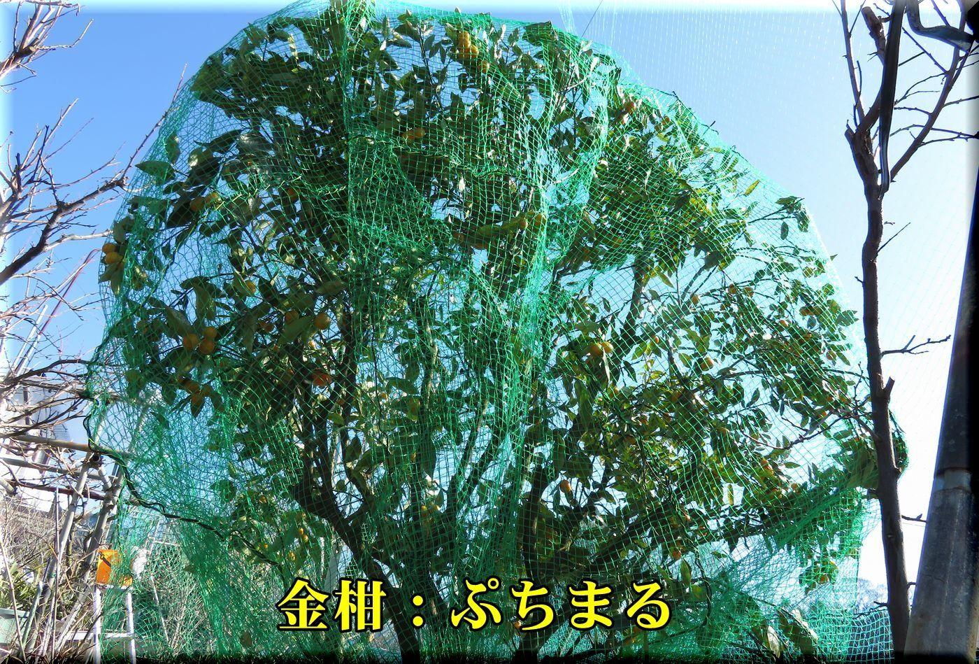 1putimaru180125_004.jpg