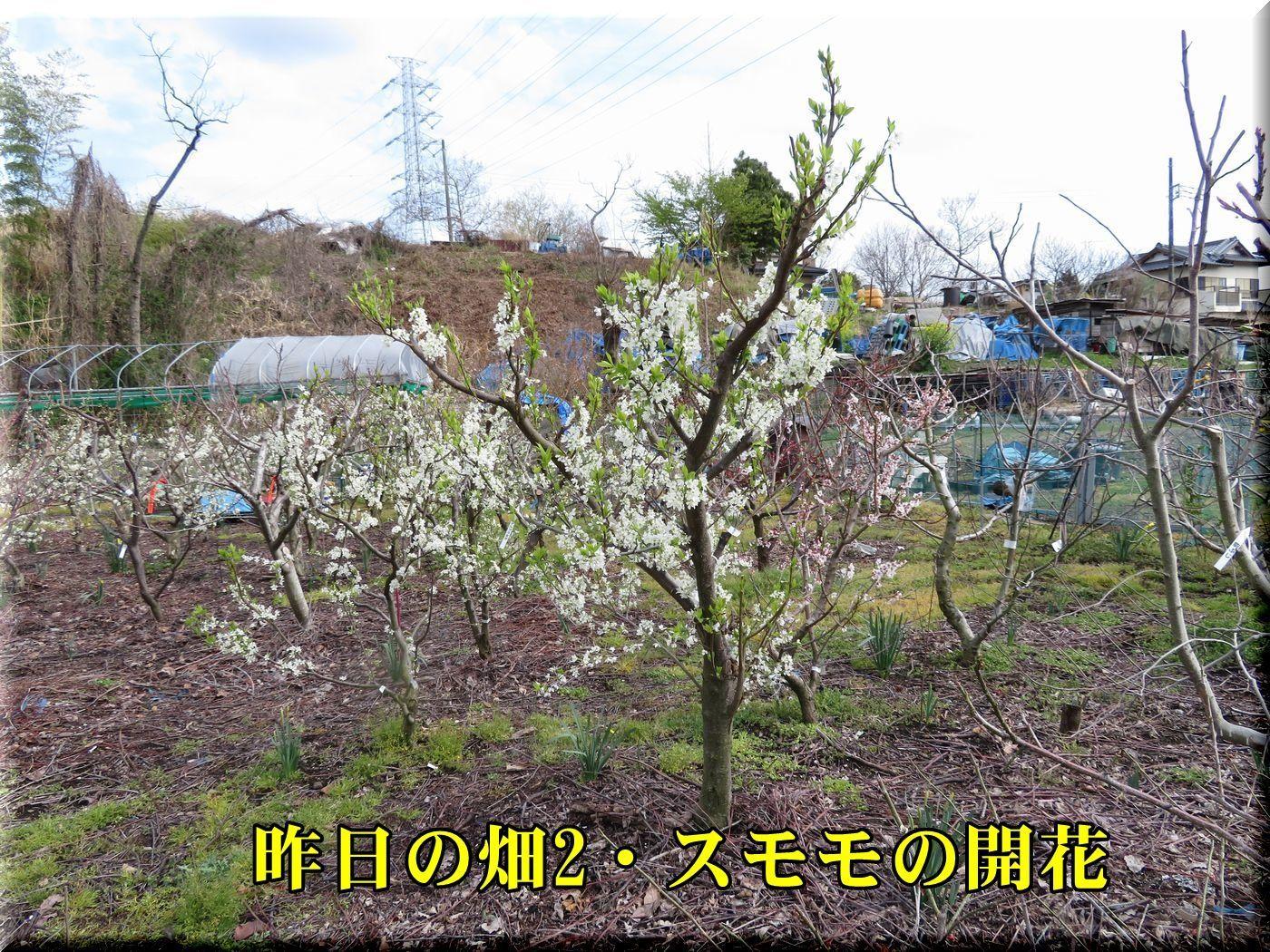 1sumomo180324_011.jpg