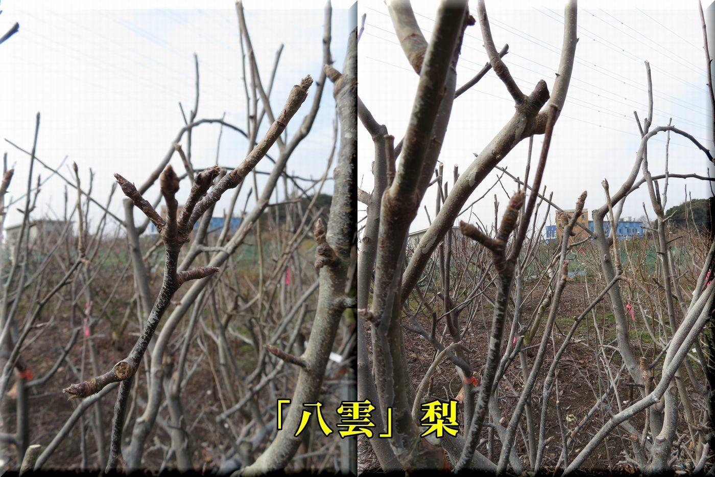 1yakumo180226_037.jpg