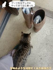 ブーツを虫干し中にやってきて足に 乗った