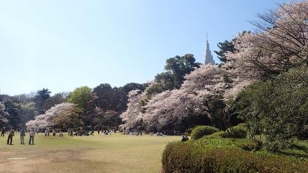 07(都庁と桜)