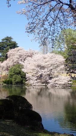 16(池と桜)-01