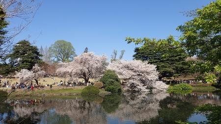 17(池と桜)-03