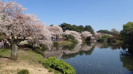 19(池と桜)-04