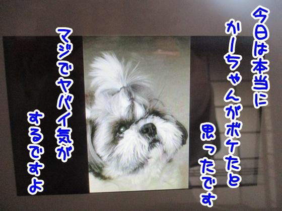 0323-08_20180323171325300.jpg