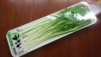 春野菜うるい1