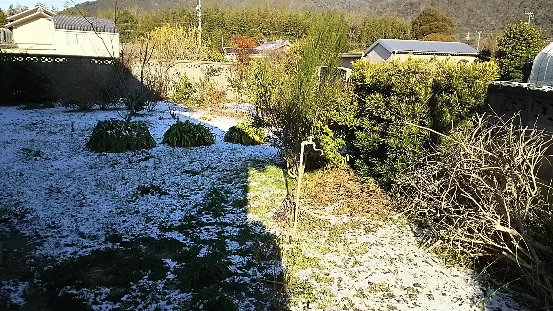 裏庭雪6日
