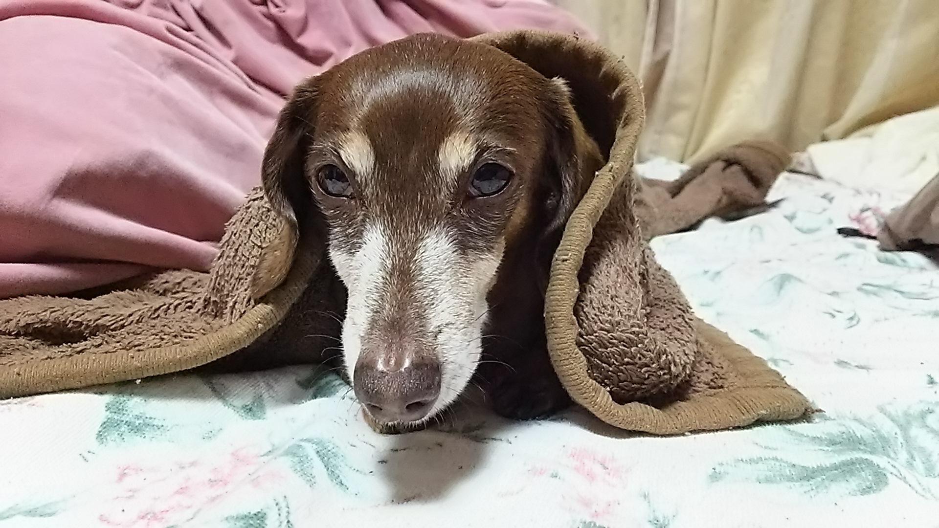 すもも毛布
