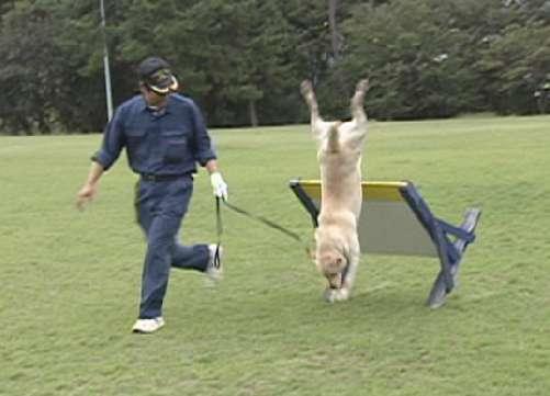 警察犬への登竜門になる競技会に6回もチャレンジするものの、その度に不合格。最後に合格したけどね。
