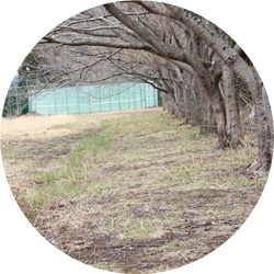 ④桜の下木球場