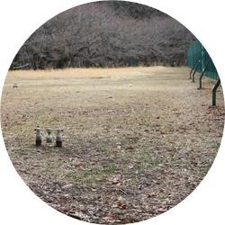 ⑤懐かしの木球場