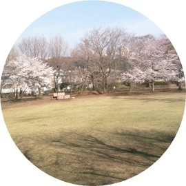 ①木球場の桜