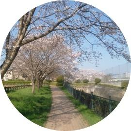 ④緑道と左に桜
