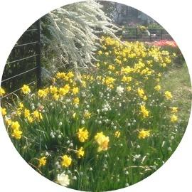 ⑧黄色い花