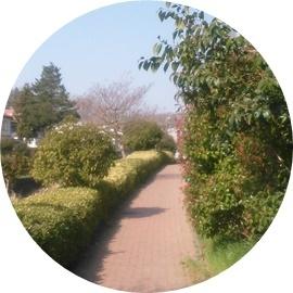 ⑨緑道の両脇は植木