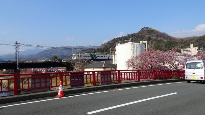 河津桜 (10)