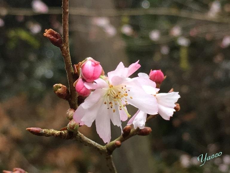 冬の東慶寺 2
