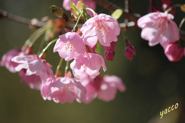 城山かたくりの里のお花 2