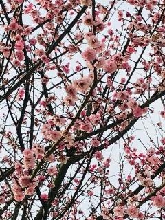 もうすぐ春_002