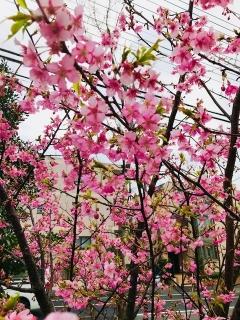 もうすぐ春_004