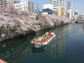 大岡川の桜_03