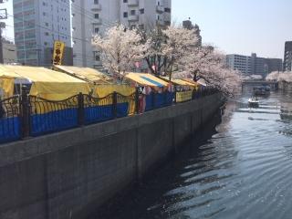 大岡川の桜_04