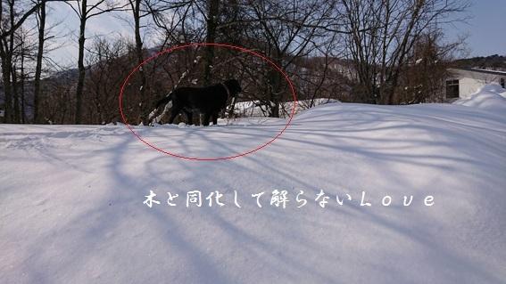 DSC_01018.jpg