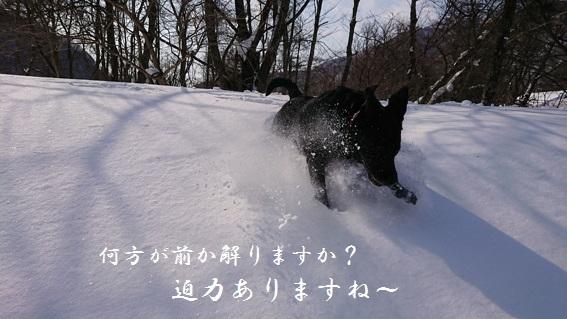 DSC_01019.jpg