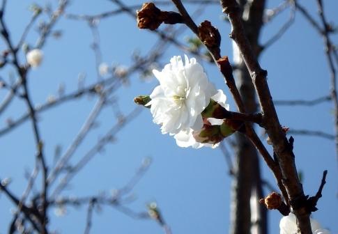 弥山庭の山野草 010-001
