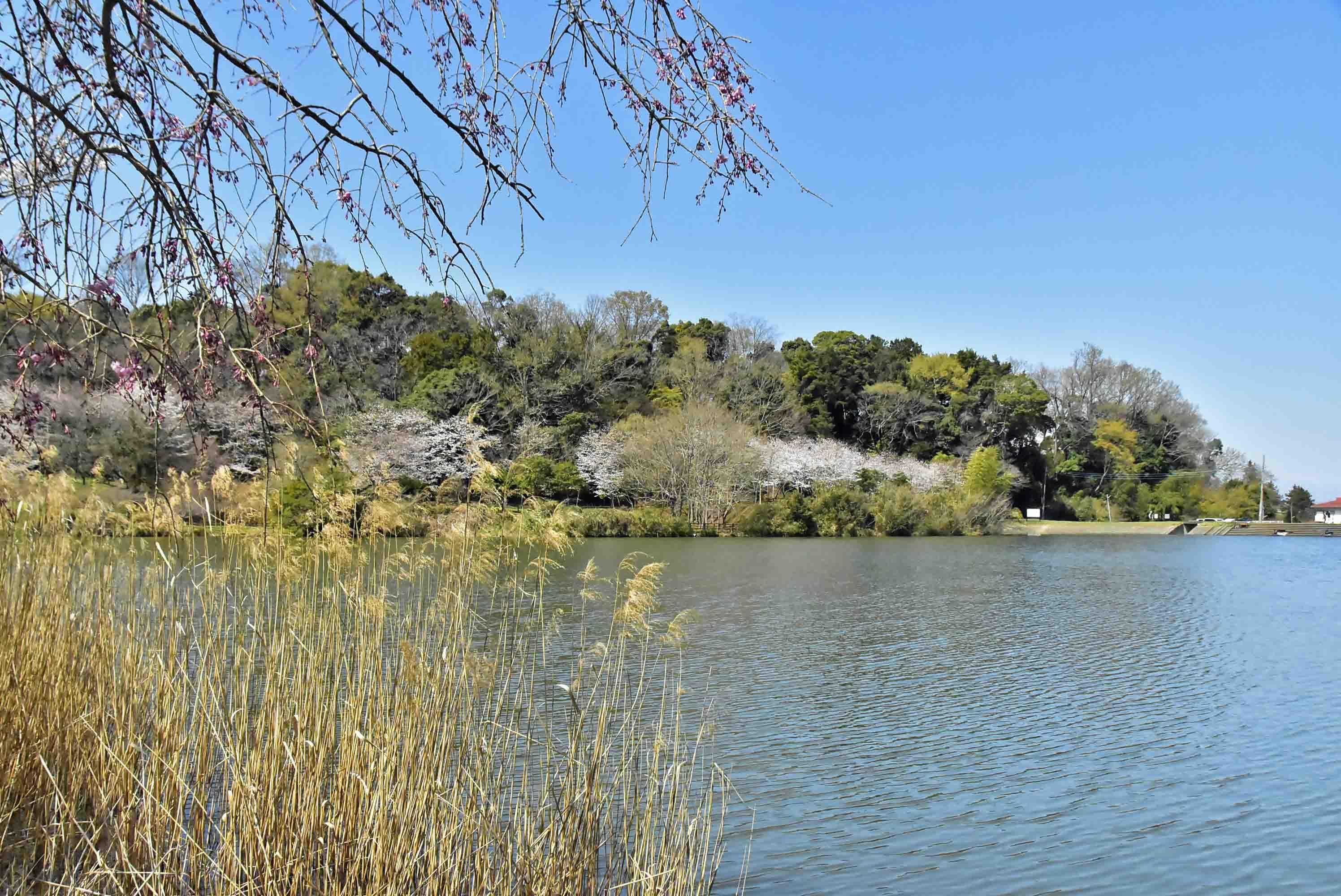 江川砦 城池側に出る