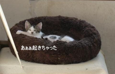 子猫0037