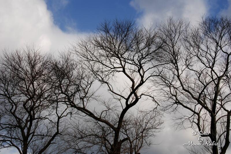 師走の木々 愛媛県西条市東光