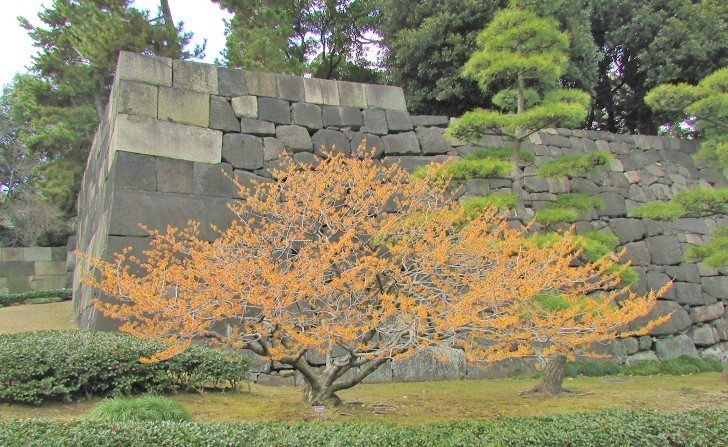 higashigyoen180217-114.jpg
