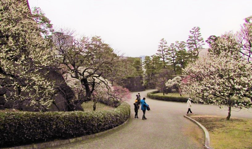higashigyoen180217-139.jpg