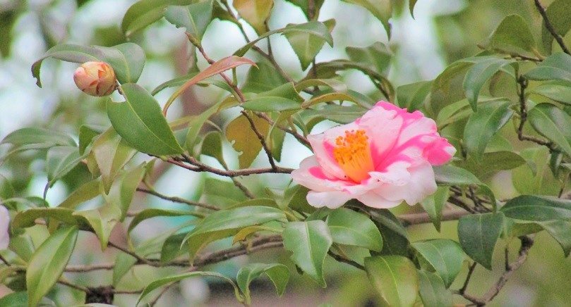 higashigyoen180217-143.jpg