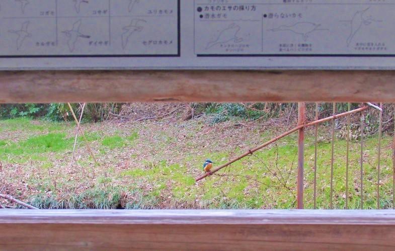 mizumoto180225-135.jpg