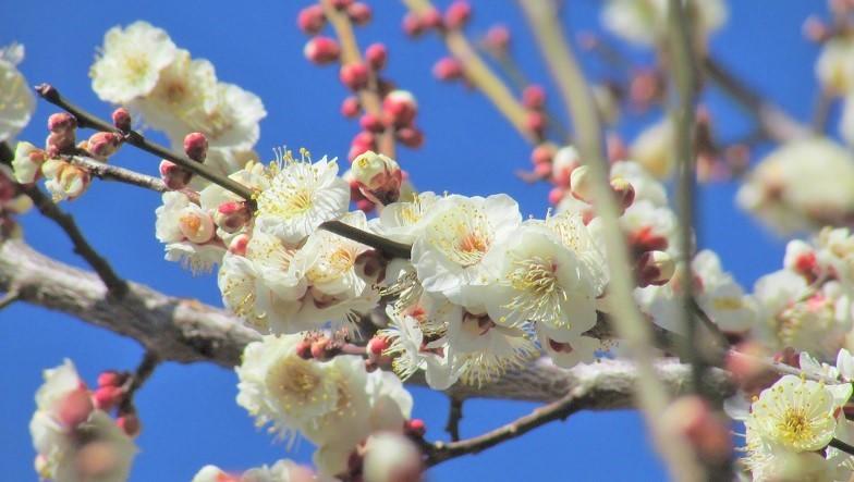 oomiyadaini180218-109.jpg