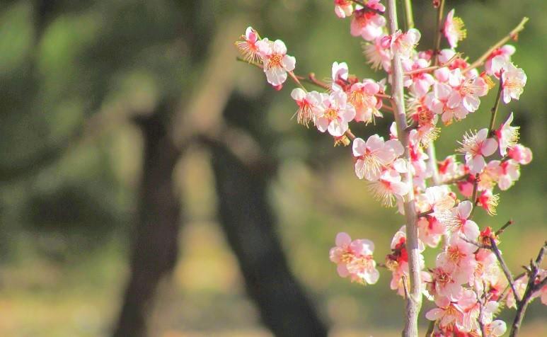 oomiyadaini180218-122.jpg