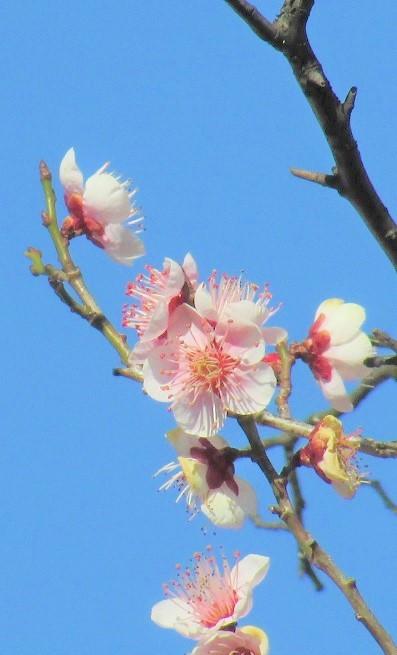 oomiyadaini180218-135.jpg