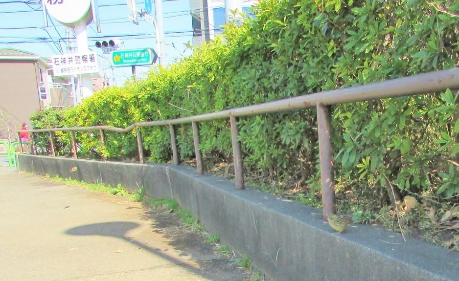 syakujii180317-125.jpg