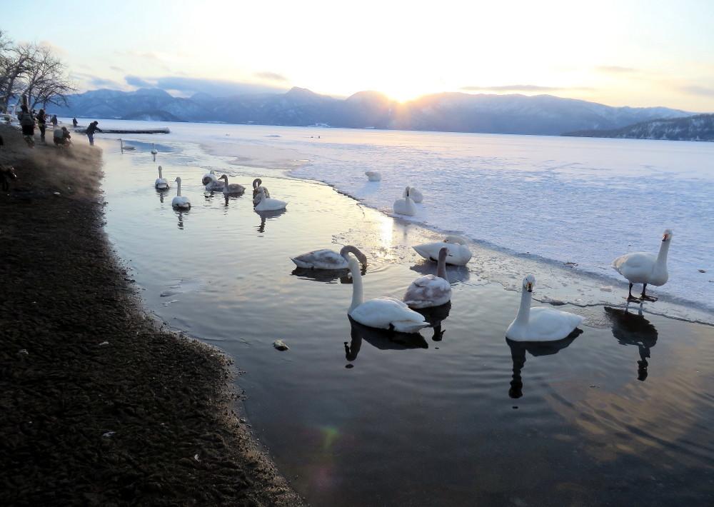 IMG_1975夕陽・白鳥
