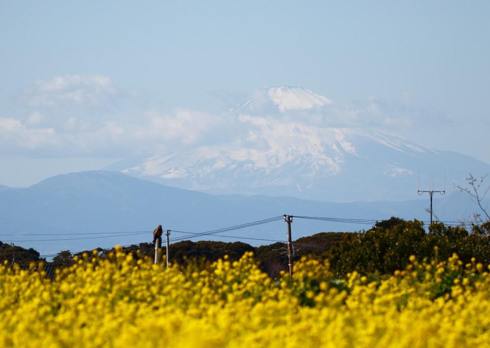 1M6A9067富士山