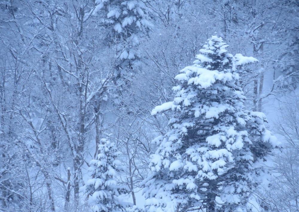 IMG_1901知床の雪ツリー
