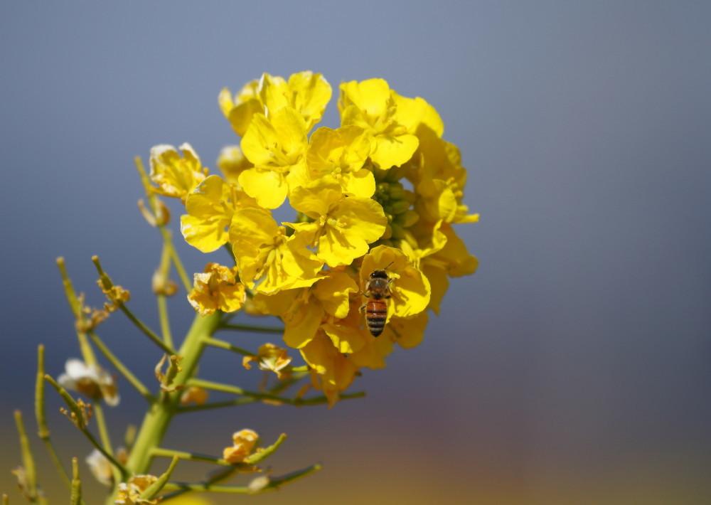 1M6A9689ミツバチ