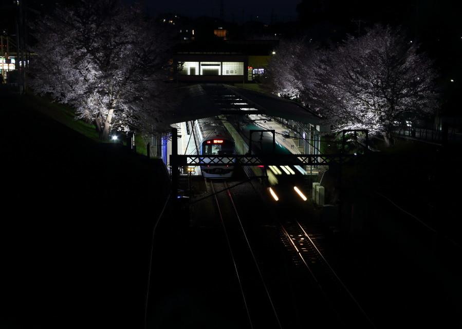 0N8A9511夜桜弥生台