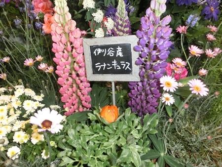 神戸花物語3