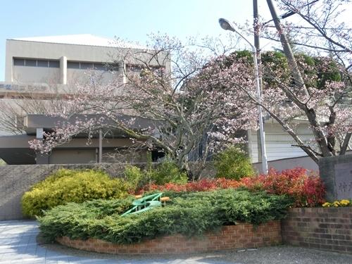 親和大学桜1